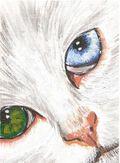 Acryliccat3a